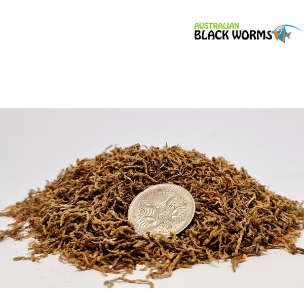 Australian Black Worm Pigmented Freeze Dried 50g Loose
